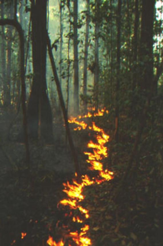 ~ snaking fire