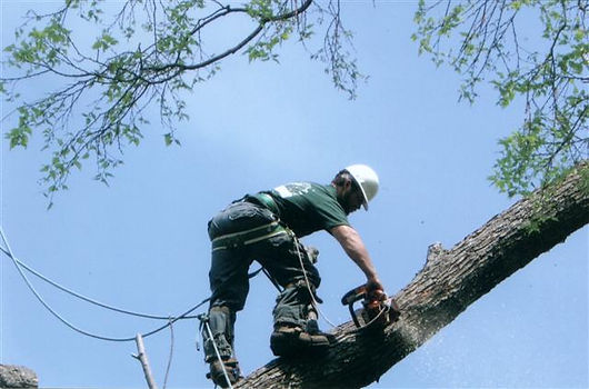 Binghamton Tree Service