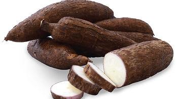 yuca, cassava, tubers Costa Rica