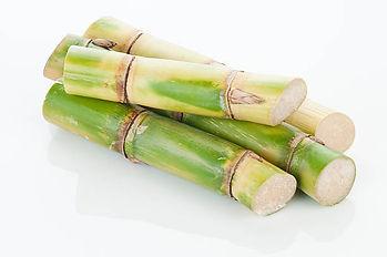 caña de azúcar, sugar cane