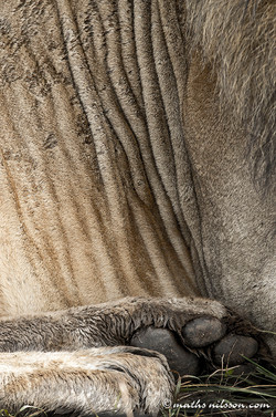 Masai Mara Kenya 2014