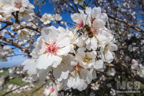 Amagada primavera