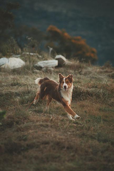 animal-animal-photography-canine-2197906.jpg