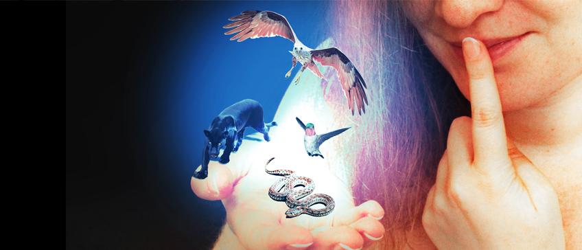 Schlange, Jaguar, Kolibri und Adler