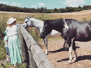 Spiegel meiner Seele – Was die Pferde sagen ohne zu sprechen
