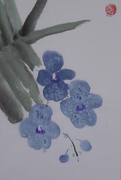 vanda blue 20x30cm