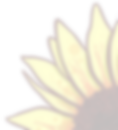 Sunflower Corner.png