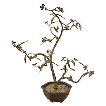 Bronze Bonsai Cherry Blossom Tree Sculpture