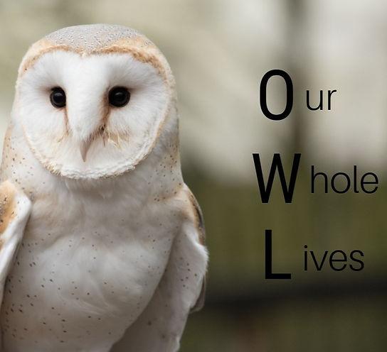 OWL2_edited.jpg