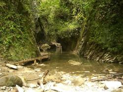 Колхидкский лес в природном парке