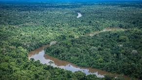 Amazônia: maior patrimônio ambiental brasileiro sofre com a ação do homem