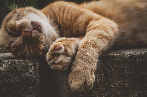 cat-3623703_1920.jpg