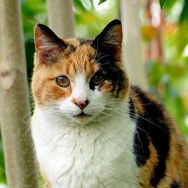 cat-794452_1920_edited.png