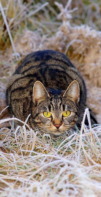 cat-1940489_1280 (kopia).jpeg