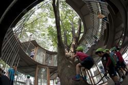 fuji_kindergarten_ring_around_a_tree_t29