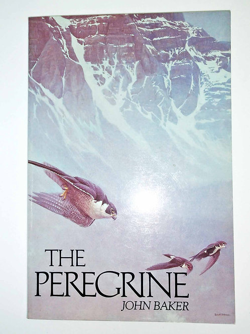 The Peregrine by John Baker