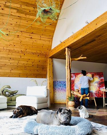 cats and dogs crestone studio.jpg