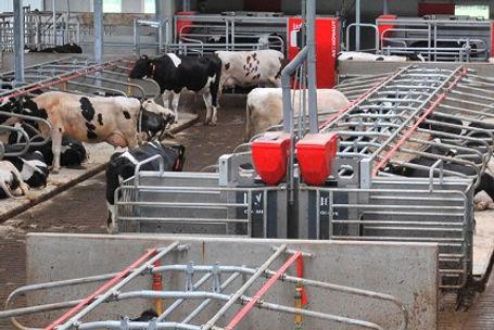 Automatic grain feeding system