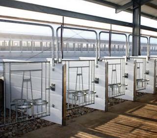 Suites for calves