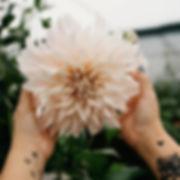 Jimena-Floweriize_flower_image_3.jpg