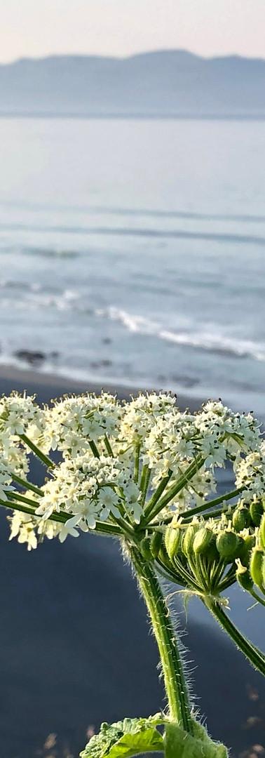 beach - siene.jpg