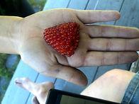 Berry - Siene.jpg