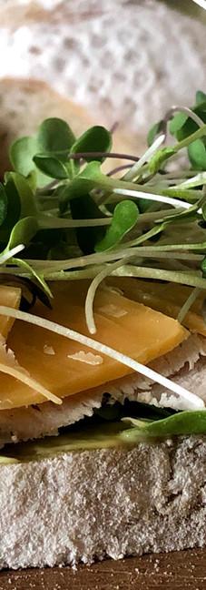 micrgoreens siene.jpg