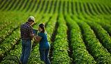 1-consultoria-agricola.jpg