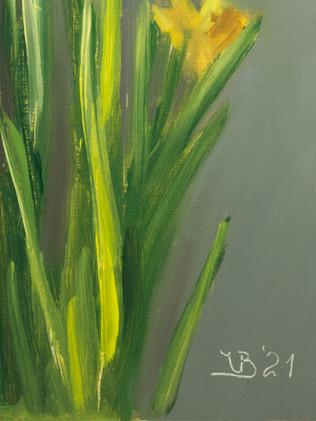 Daffodils_3
