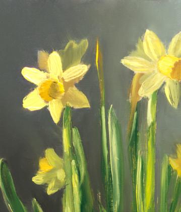 Daffodils_4