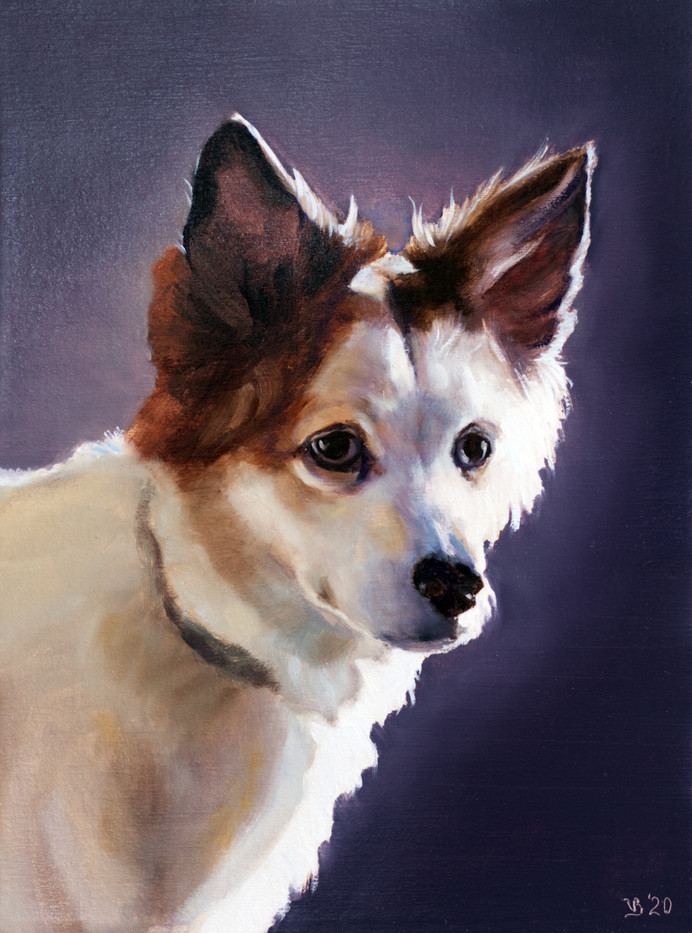Pet Portraits_3
