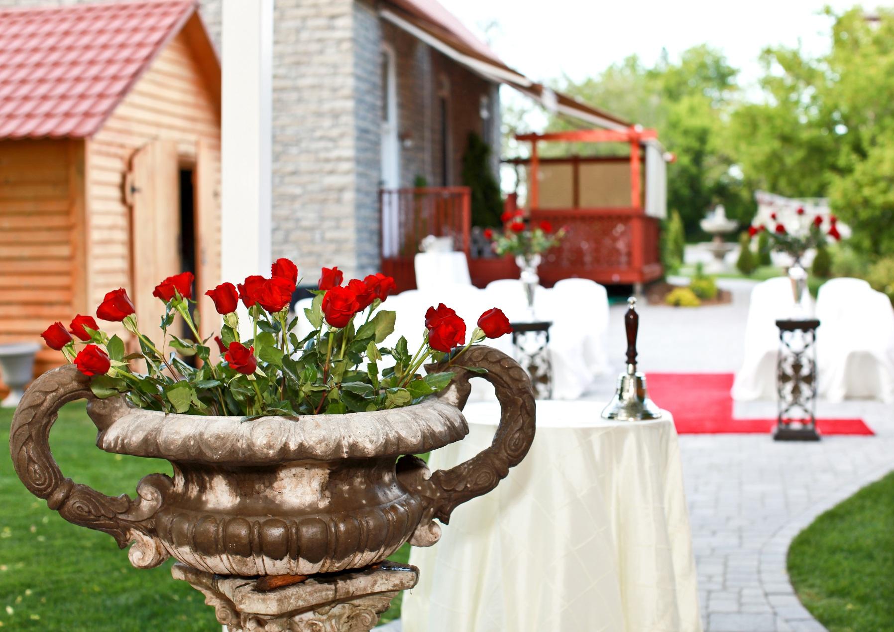courtyard roses.jpg