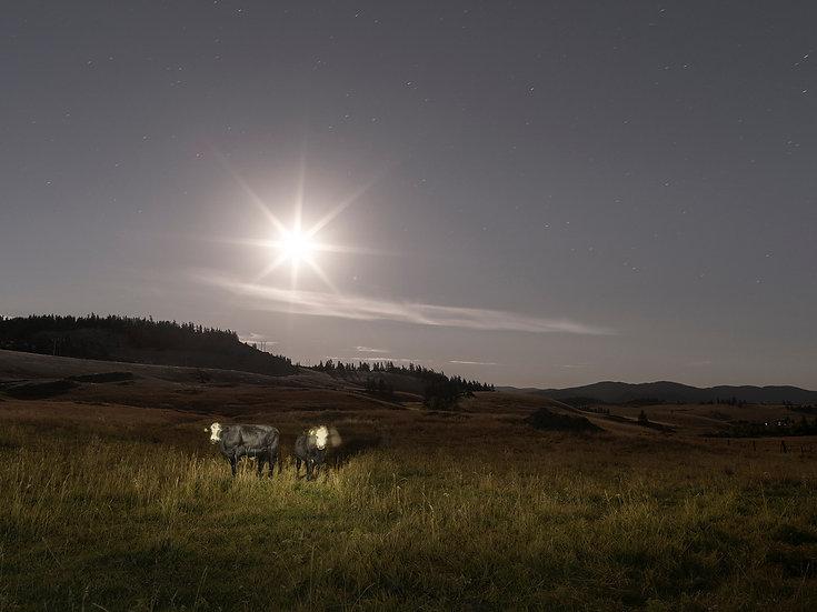 Twins Under Moonlight