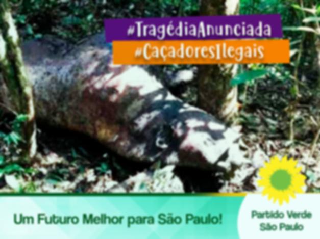 noticia13.png