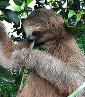 sloths 4.jpeg