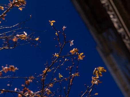 Looking upwards - the evening sky of my beloved Ixelles
