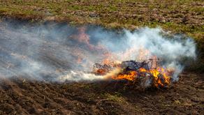 Autorização de queima controlada deve ser requerida até 30 de junho junto à SEMAD - GO