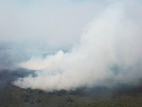 Por que o Pantanal vive 'maior tragédia ambiental' em décadas