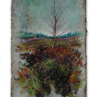 Winter Birch, Moseley Green. 15x24cm. - SOLD