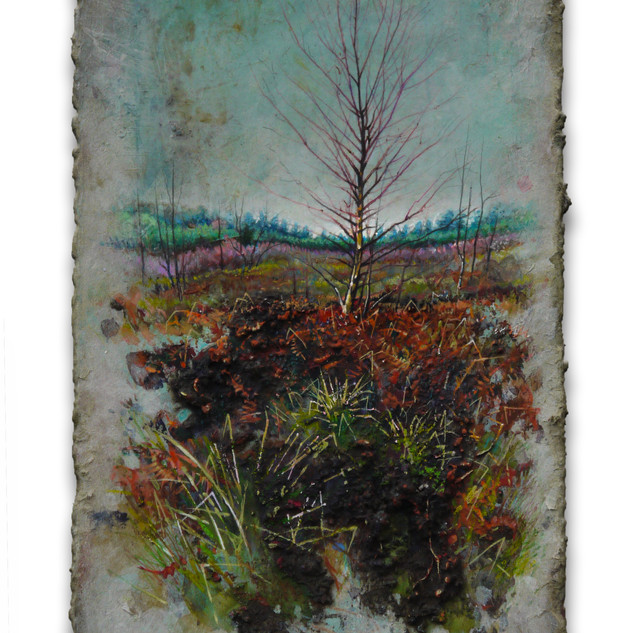 Winter Birch, Moseley Green. 15x24cm. - SOLD