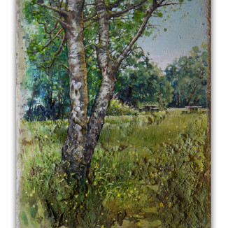Single Birch at Cannop. 17x21cm. - Available