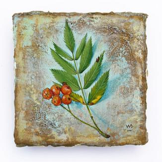 Rowan leaf. 10x10cm. - NFS