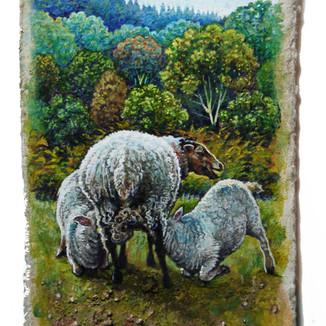 Lambs feeding. 10.5x6cm. - SOLD