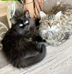 Benji et Zoé