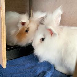 Canelle et Cookie