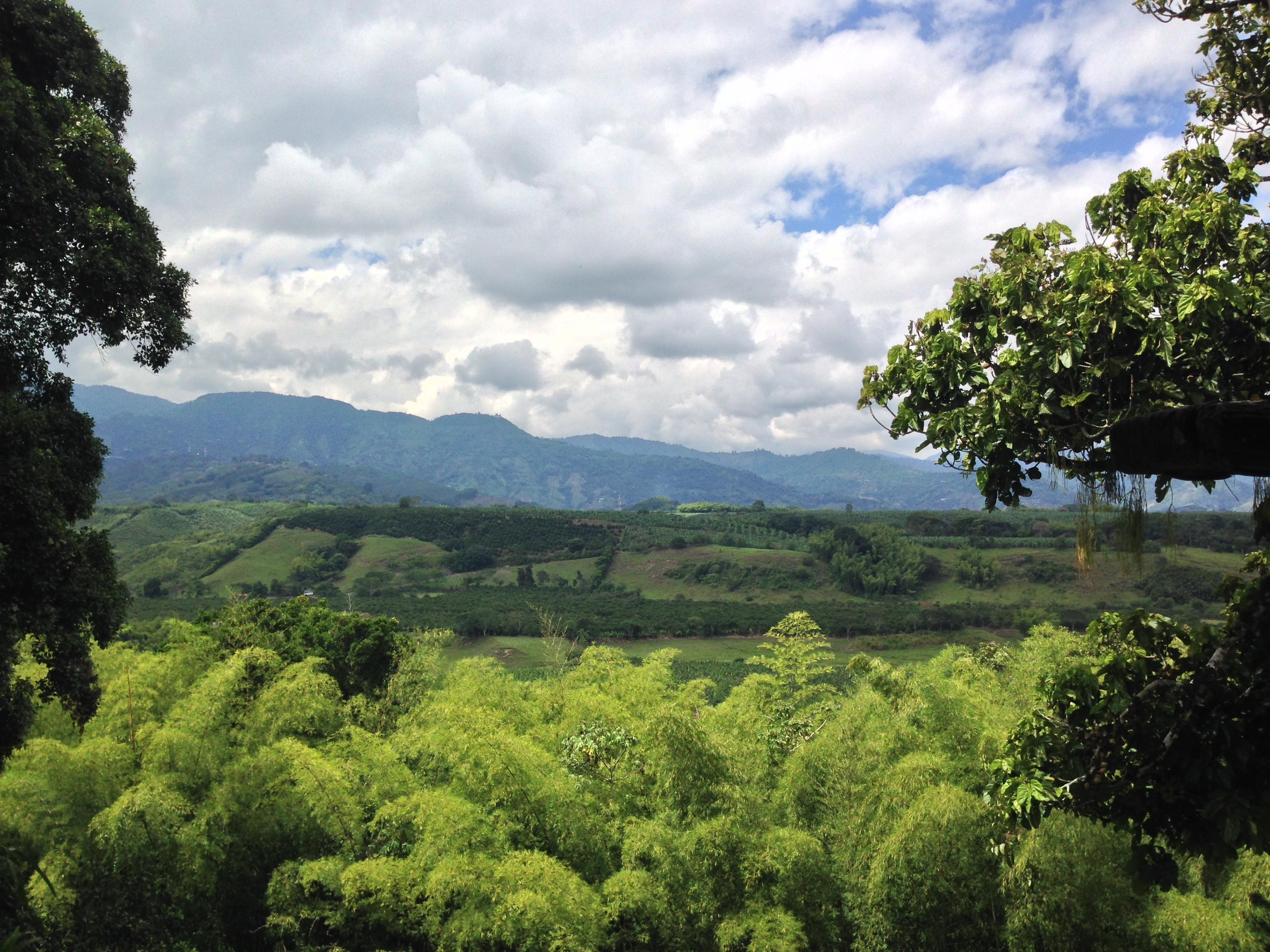 Colombia Coffee Landscape.JPG