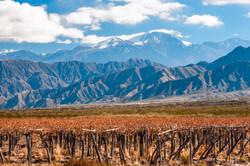 Argentina-Mendoza2.jpg