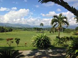 Colombia Bambusa Landscapes.JPG