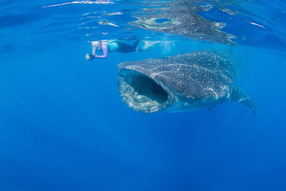 140710_Whale Sharks_0123.jpg