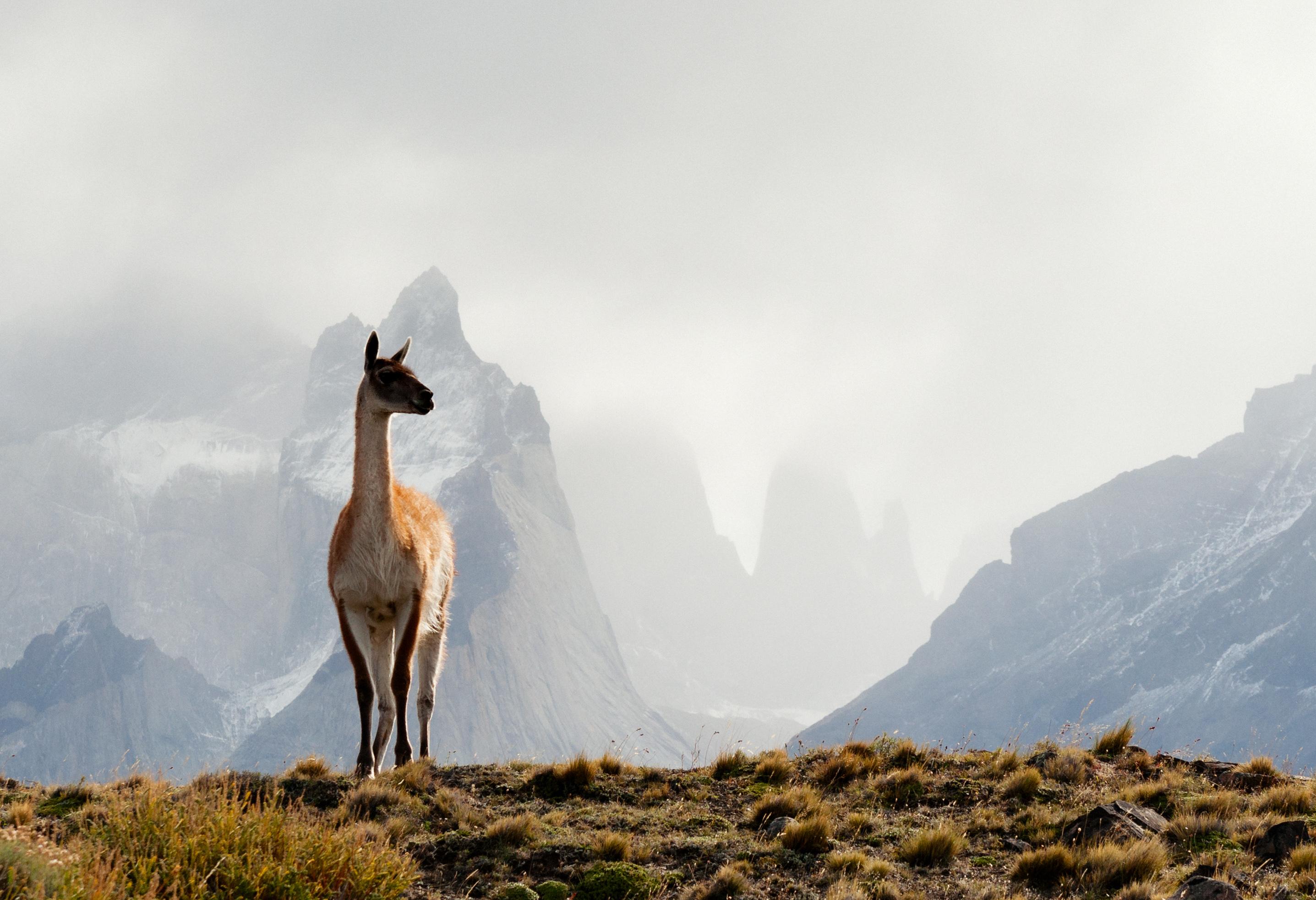 Argentina-Atlantic-Patagonia4.jpg